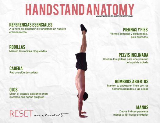 handstand-anatomy